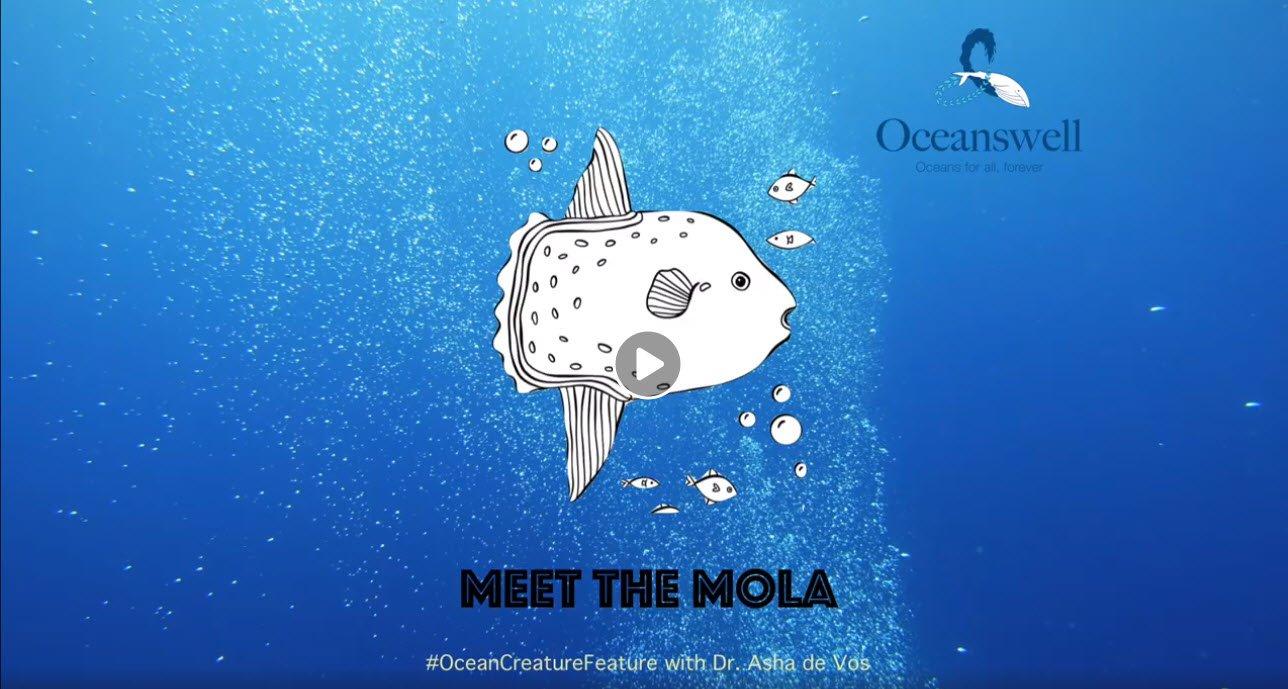 Episode 1: Meet the Mola 10