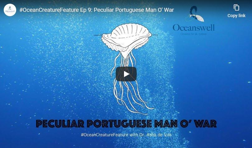 Episode 9: Peculiar Portuguese Man O' War 2
