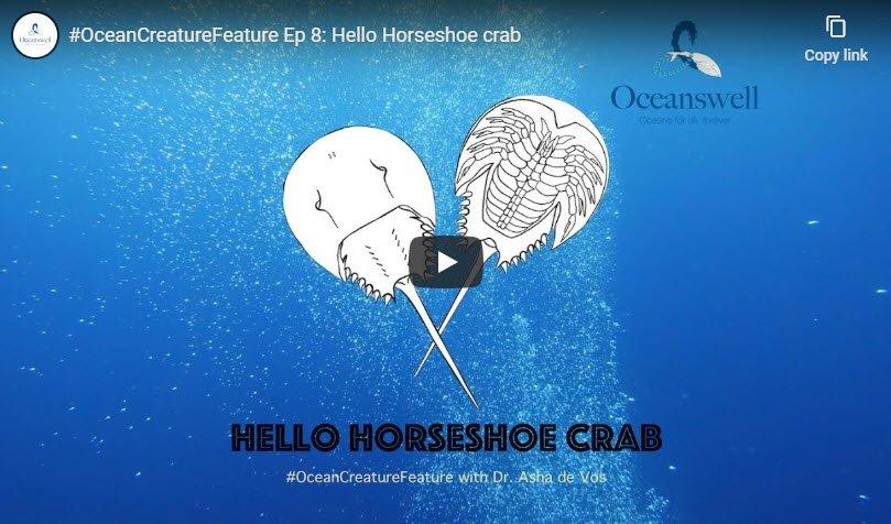 Episode 8: Hello Horseshoe crab 3