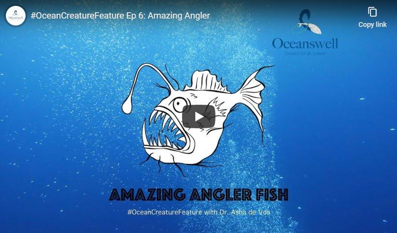 Episode 6: Amazing Angler 5