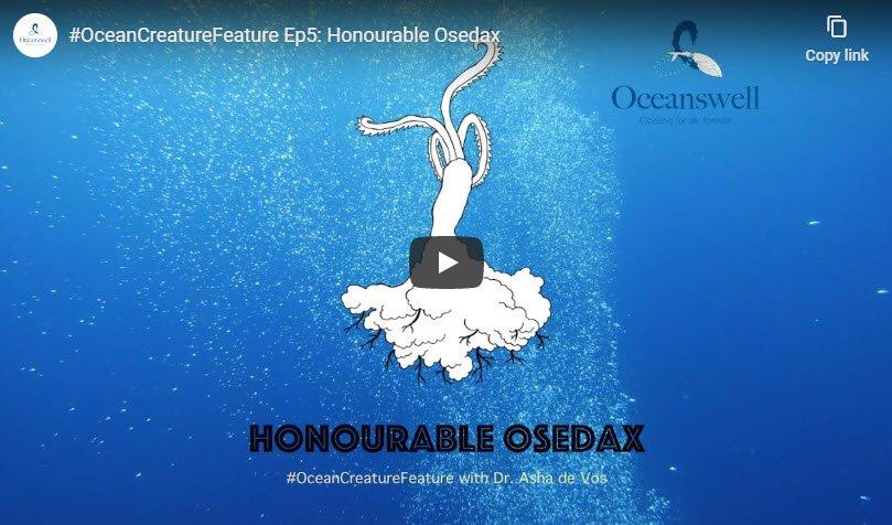 Episode 5: Honourable Osedax 6