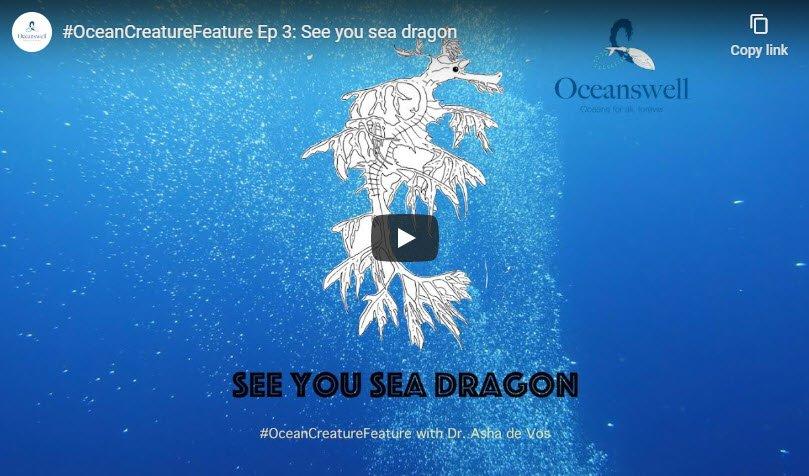 Episode 3: See you sea dragon 8