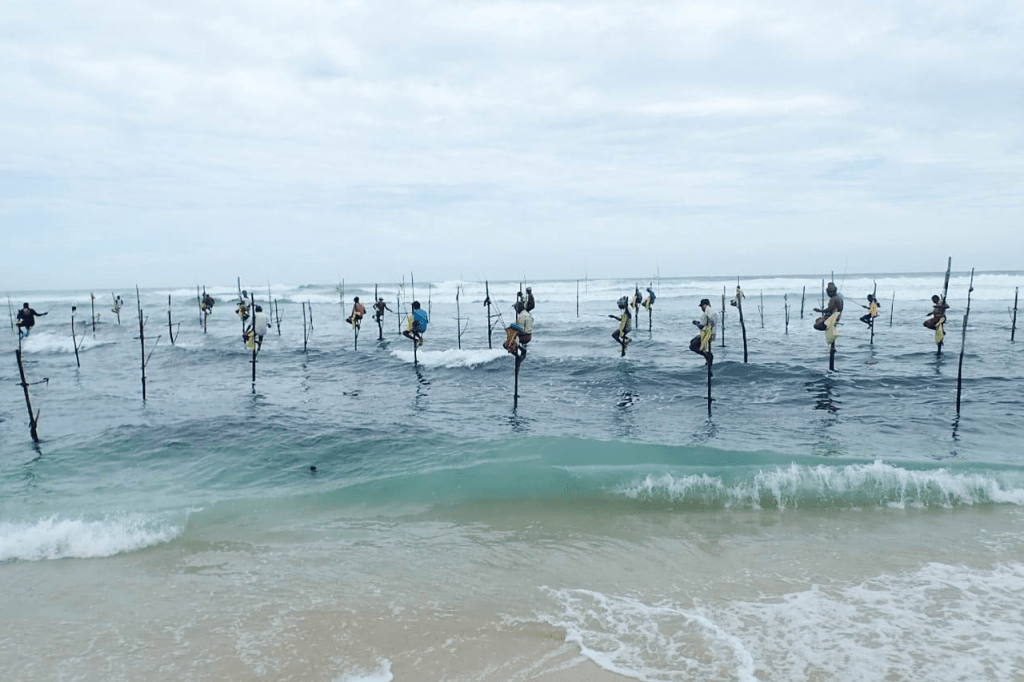 Oceanswell COVID-19 and Fisheries Project 4
