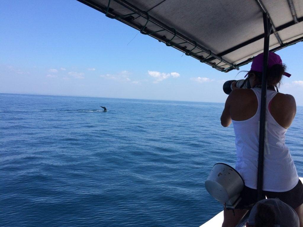 The Sri Lankan Marine Mammal Photo-identification Database 2